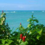 ハワイ旅行女性|機内で快適に過ごせるおすすめの服装&現地での服装